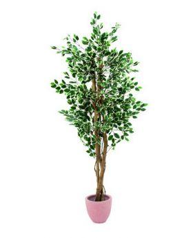 Silberficus-Benjamini Zementtopf 180cm, Kunstpflanze
